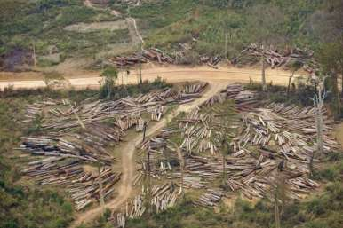 A logging site inside a forest in Boulikhamsai, Laos
